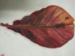 Deepika-Artwork-3-Leaf-Painting