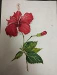Deepika-Artwork-8-Hibiscus-Flower-Painting