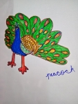 F-Sameena-Artwork-3-Peacock-Drawing