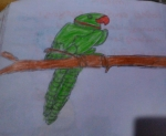 Gouri-Nanda-Anil-Artwork-8-Parrot