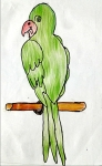 Shlok-Sethia-Artwork-6-Parrot