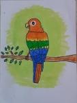 Shrika-Sriram-Artwork-5-macaw