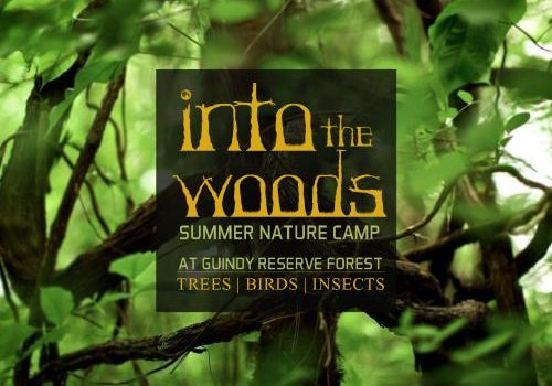 Summer Nature Camps 2017 by Bay of life