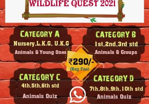 Purple Wings Presents WILDLIFE QUEST 2021 for Kids